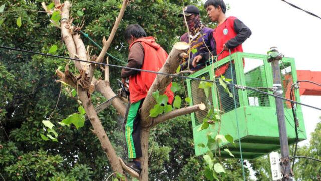 Dinas LH Sayangkan Kesadaran Warga Terkait Pentingnya Keberadaan Pohon